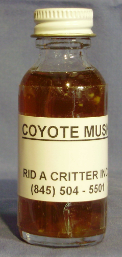 COYOTE MUSK